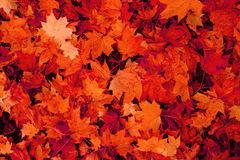 autumn leaves natural background Stock Image