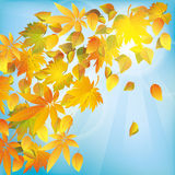 Autumn leaves, nature background Royalty Free Stock Images