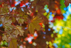 Autumn leaves in the nature background Stock Photography