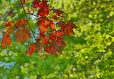 Autumn leaves in the nature background Royalty Free Stock Photos