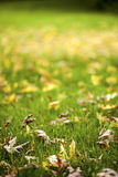 Autumn Leaves Nature Concept asciutto immagine stock