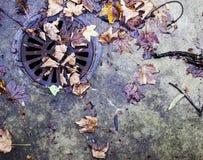 Autumn Leaves Nature Concept seco Foto de archivo