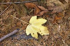 Autumn Leaves Nature Concept seco Imagen de archivo libre de regalías