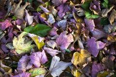 Autumn Leaves Nature Concept seco Fotografía de archivo
