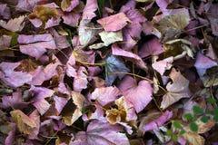 Autumn Leaves Nature Concept seco Fotos de archivo libres de regalías
