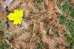 Autumn Leaves Nature Concept seco Imágenes de archivo libres de regalías