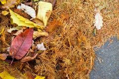Autumn Leaves Nature Concept seco Foto de archivo libre de regalías