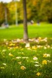 Autumn Leaves Nature Concept seco Imagenes de archivo