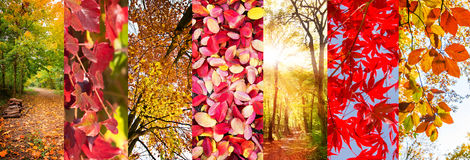Autumn leaves and nature landscapes panoramic collage. Fall concept Royalty Free Stock Photography
