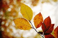Autumn leaves. Nature is about to take it's coat off Stock Photos