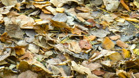 Autumn leaves. Nature stock video
