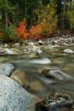 Autumn Leaves near the creek Stock Photos