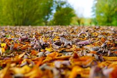 Autumn leaves near trees Stock Photography