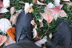 Autumn leaves in new york city Stock Photos