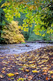 Autumn leaves next to small forest creek Royalty Free Stock Photo