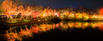 Autumn Leaves in night time. Stock Photos