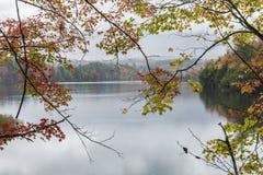 Autumn Leaves no lago Waterbury Foto de Stock Royalty Free