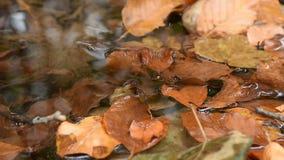 Autumn Leaves no ribeiro Fundo do conceito do outono Autumn Scene idílico calmo do folhas coloridas em uma angra video estoque