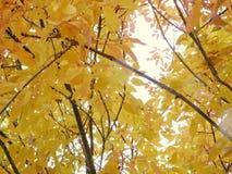Autumn Leaves in November in Colorado royalty-vrije stock foto's