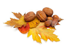 Autumn leaves and nuts Stock Photos