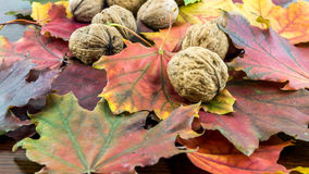 Autumn leaves and nuts Royalty Free Stock Photos