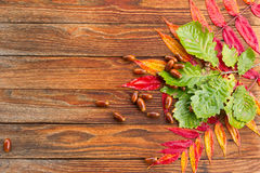 Autumn leaves and oak acorns on the wooden boards Royalty Free Stock Photography