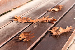 Autumn leaves of the oak tree on the bench Stock Photos