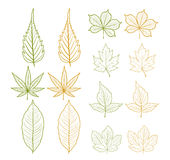 Autumn leaves object Royalty Free Stock Photography