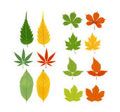 Autumn leaves object Stock Photos