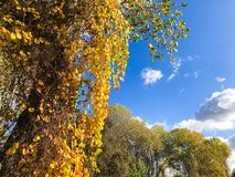 Autumn Leaves och ljus blå himmel royaltyfri foto