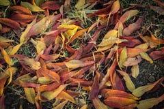 Autumn Leaves och nedgångfärger Royaltyfri Bild