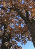 Autumn Leaves In Oklahoma Stock Afbeelding