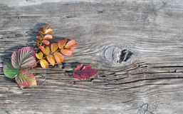 Autumn Leaves and Old Board Royalty Free Stock Photography