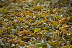 Autumn leaves old Stock Images