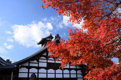 Autumn leaves at old Japanese temple, Kyoto. Royalty Free Stock Photo