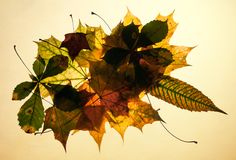 Autumn leaves on old paper Royalty Free Stock Image