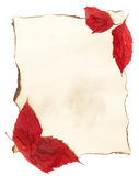 Autumn Leaves on Old Paper Stock Photo
