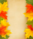 Autumn leaves with old paper  Back to school Stock Photo