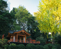 Autumn leaves and an old Shinto shrine, Japan Stock Photo