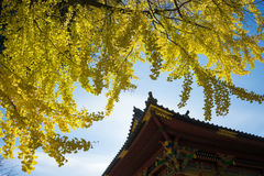 Autumn leaves and an old Shinto shrine, Japan Royalty Free Stock Images