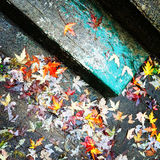 Autumn leaves on old stone steps Royalty Free Stock Images