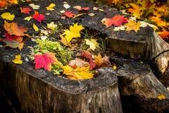 Autumn leaves on an old tree stump Stock Image