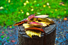 Autumn leaves on an old tree stump Royalty Free Stock Photos