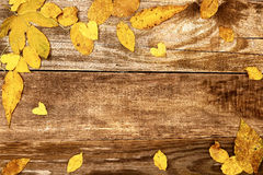 Autumn leaves on old wood Stock Images