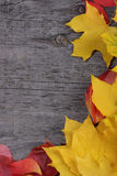 Autumn leaves on old wooden background Royalty Free Stock Photo