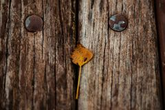 Autumn Leaves On Old Wooden-Bank in het Park Stock Afbeelding