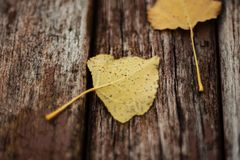 Autumn Leaves On Old Wooden-Bank in het Park Stock Foto's
