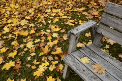 Autumn leaves and old wooden bench Stock Image