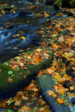 Autumn Leaves On River Royalty Free Stock Images