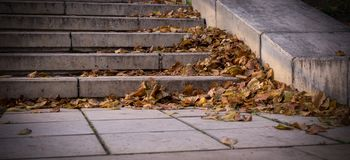 Free Autumn Leaves On Stone Stairs Of City Park. Vignette, Background, Seasonal. Royalty Free Stock Image - 161638856